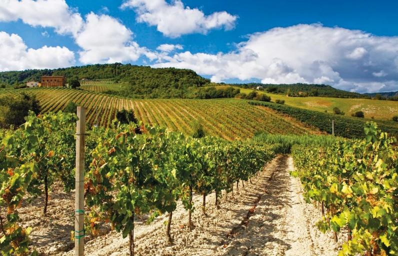 Il turismo del vino in Italia: opportunità da cogliere